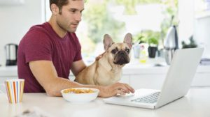 How to Become an Online Veterinarian